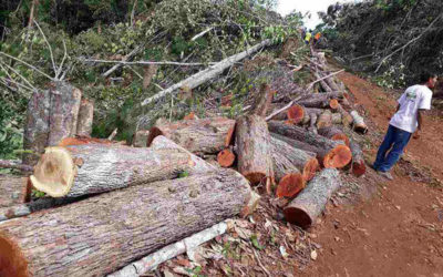 Bishop cries foul after mining firm clears forest in Palawan