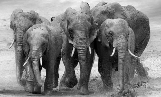 An Indian woman became a nun…because of elephants?