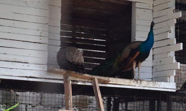 Parish turns garbage dump into mini zoo