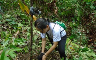 Church in Palawan aims to plant 10k trees