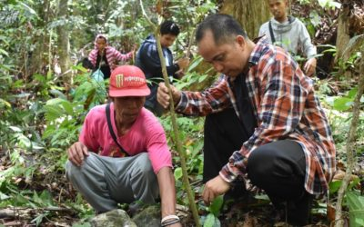 Palawan Church plants 10K trees in protected area