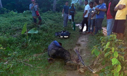 Palawan prelate decries killing of forest ranger