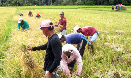 'Listen to cry' of farmers, bishop urges gov't