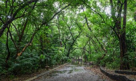 Church group lauds declaration of Arroceros as 'permanent forest park'