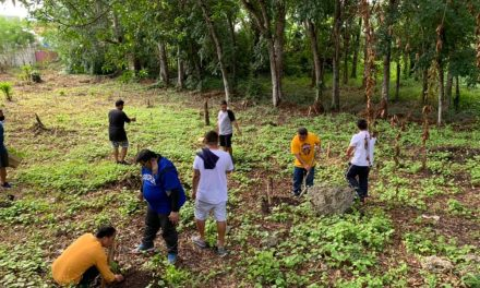 Bohol diocese plants 60k trees in single day